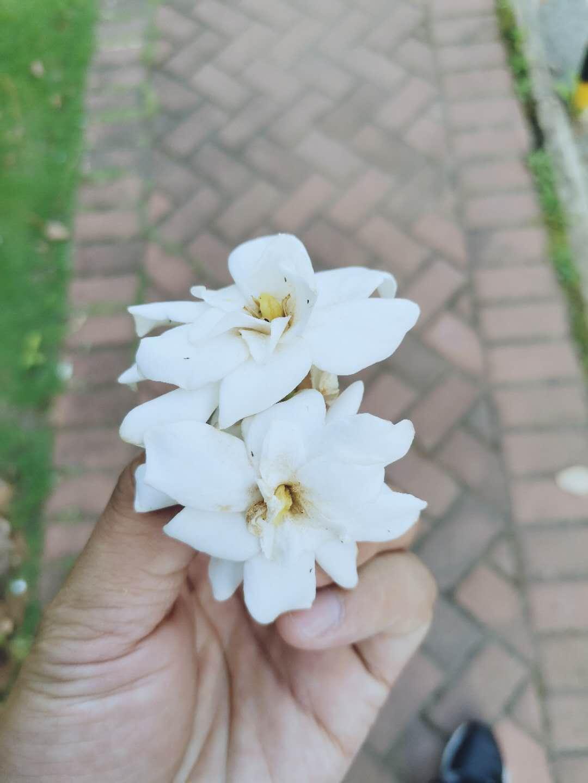 凤凰花开的路口